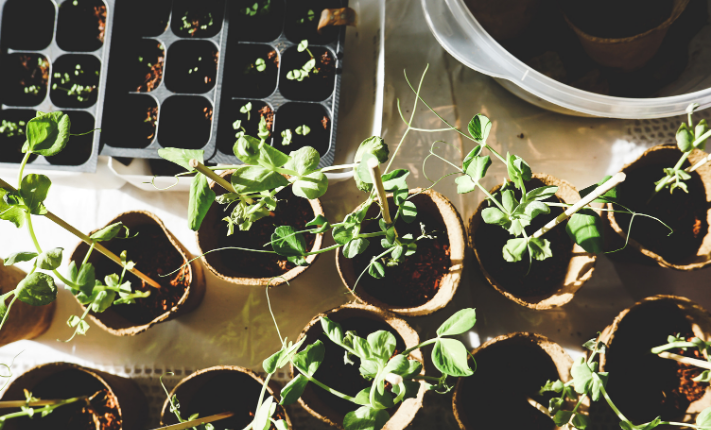 tips for gardening_featured